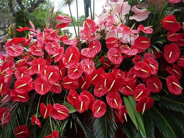 Flores resistentes para jardim externo decorando casas for Plantas ornamentales y sus cuidados