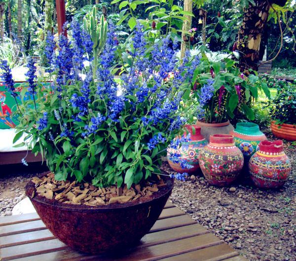 Flores resistentes para jardim externo  Decorando Casas