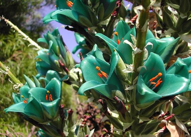 Flores resistentes para jardim externo floresresistentesjardim