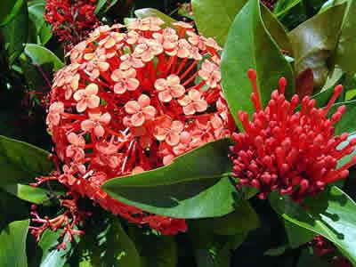 Flores resistentes para jardim externo decorando casas for Plantas de exterior resistentes