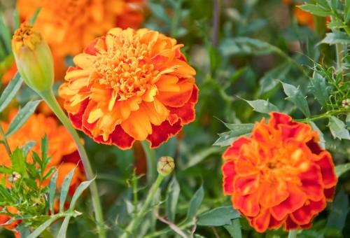 fotos de flores resistentes para jardim externo
