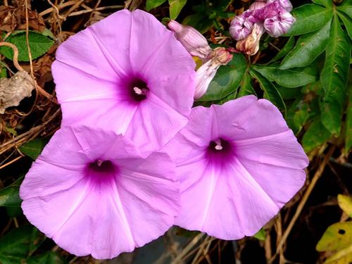 flores jardim externo:Flores resistentes para jardim externo