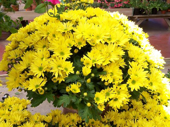 fotos de jardim externo:fotos de flores resistentes para jardim externo