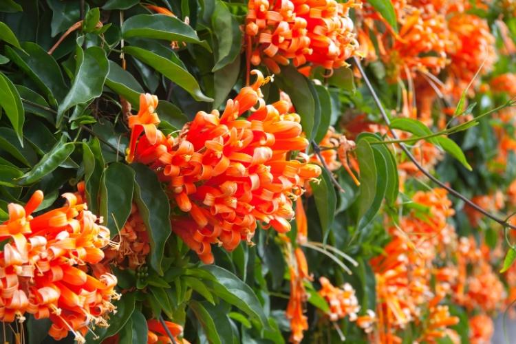 plantas jardim externo : plantas jardim externo:Flores De Inverno No Brasil