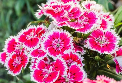 Flores resistentes para jardim externo decorando casas Plantas baratas de exterior