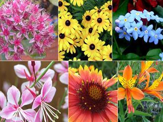 flores-resistentes-jardim-externo