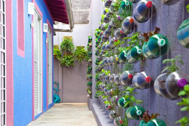 plantas para jardim vertical de garrafa pet:Jardim suspenso com garrafas pet passo a passo