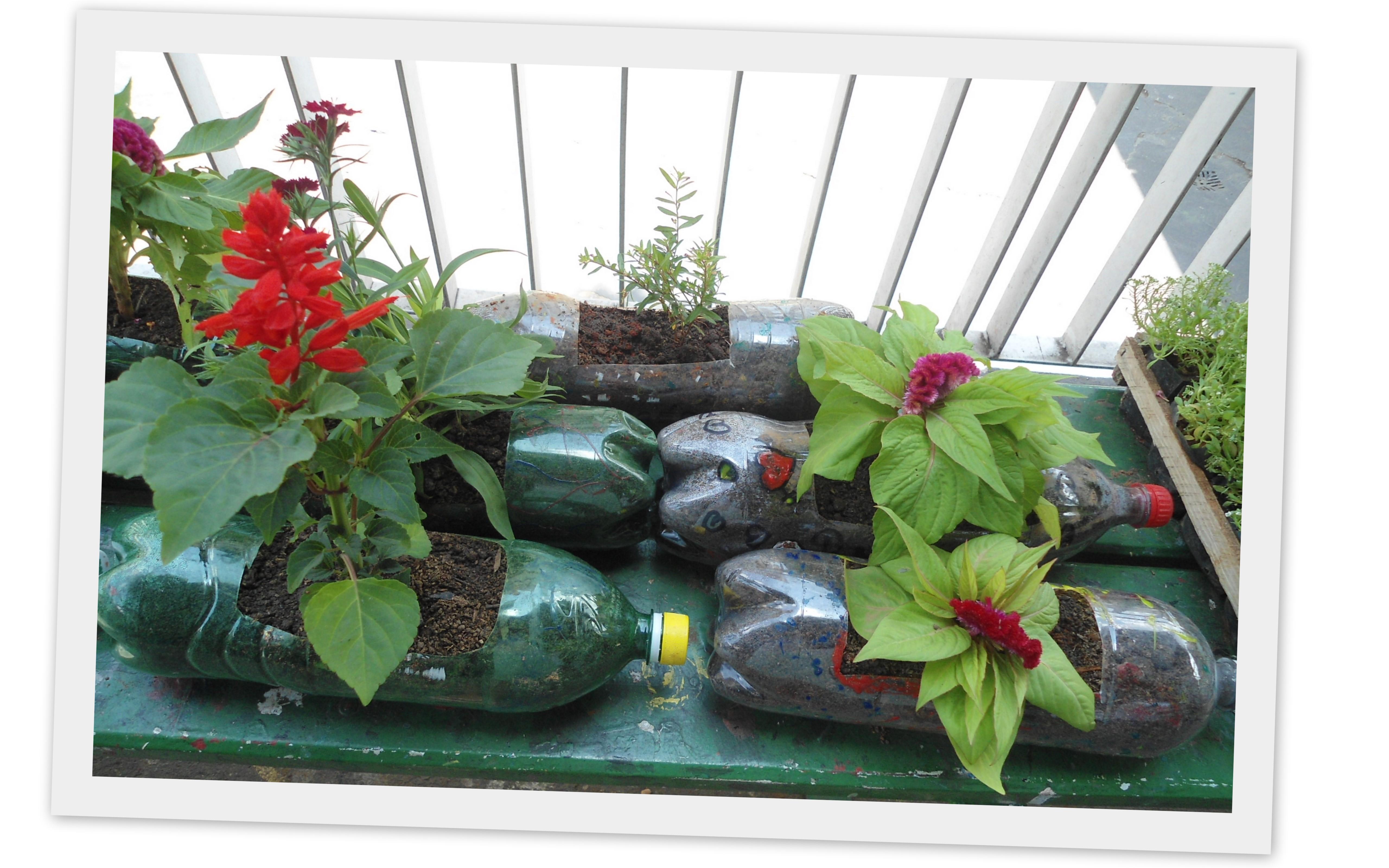 fazer jardim vertical garrafa pet:Jardim Suspenso Com Garrafas Pet