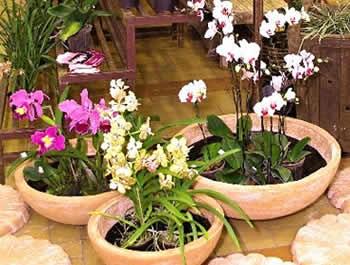 Orqu deas como cuidar e plantar decorando casas - Como cuidar una hortensia de exterior ...