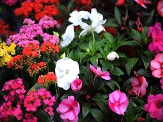 jardim-flores-ano-todo