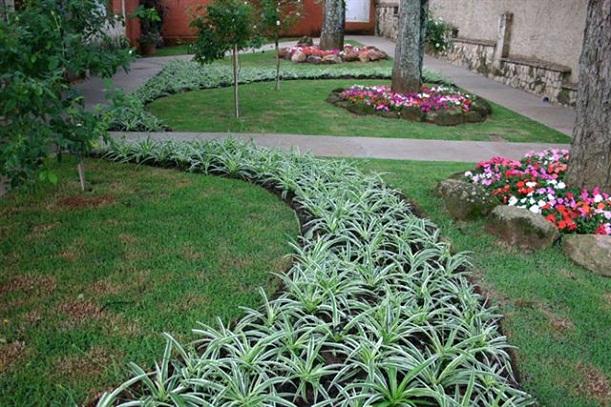 plantas para jardim muito sol:Nomes de plantas para jardim