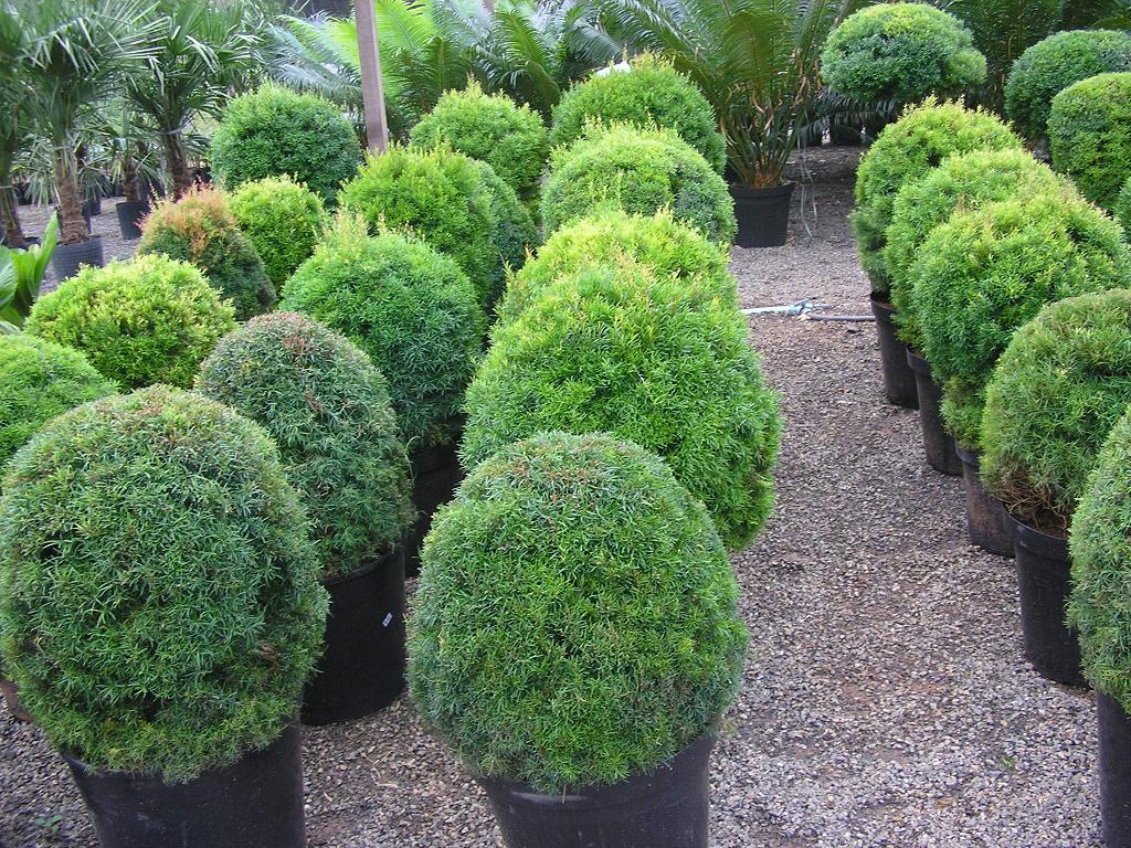 Nomes de plantas para jardim decorando casas for Jardin de plantas