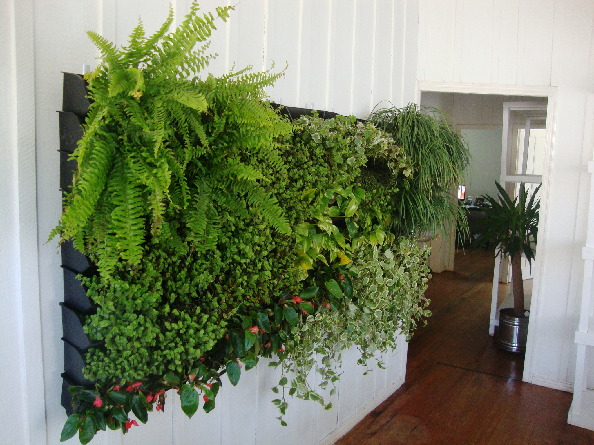 Nomes de plantas para jardim Decorando Casas