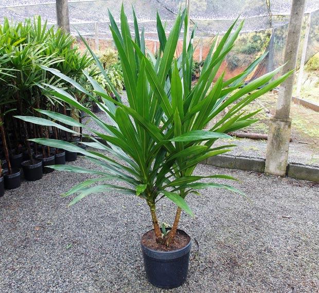plantas jardim de sol:Planta De Sol Para Jardim 7 Pictures to pin on Pinterest