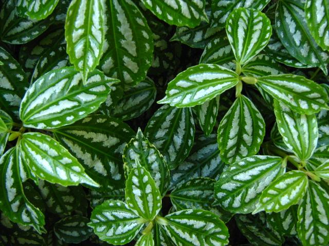 plantas jardim de sol:Nome De Plantas