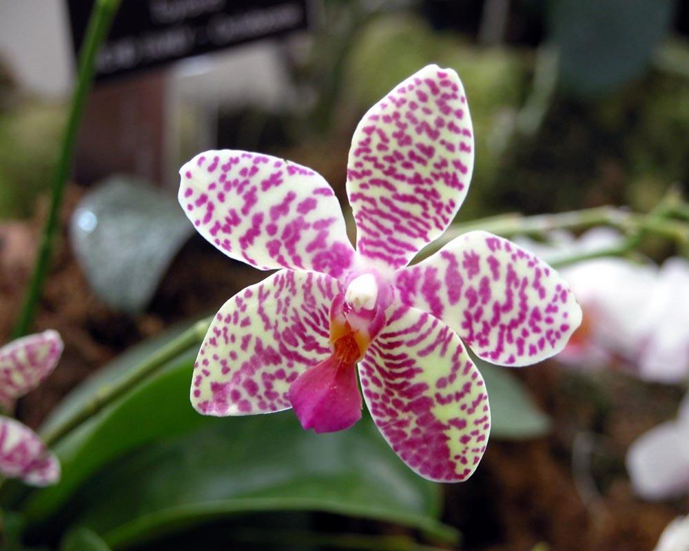 Resultado de imagem para fotos de orquideas