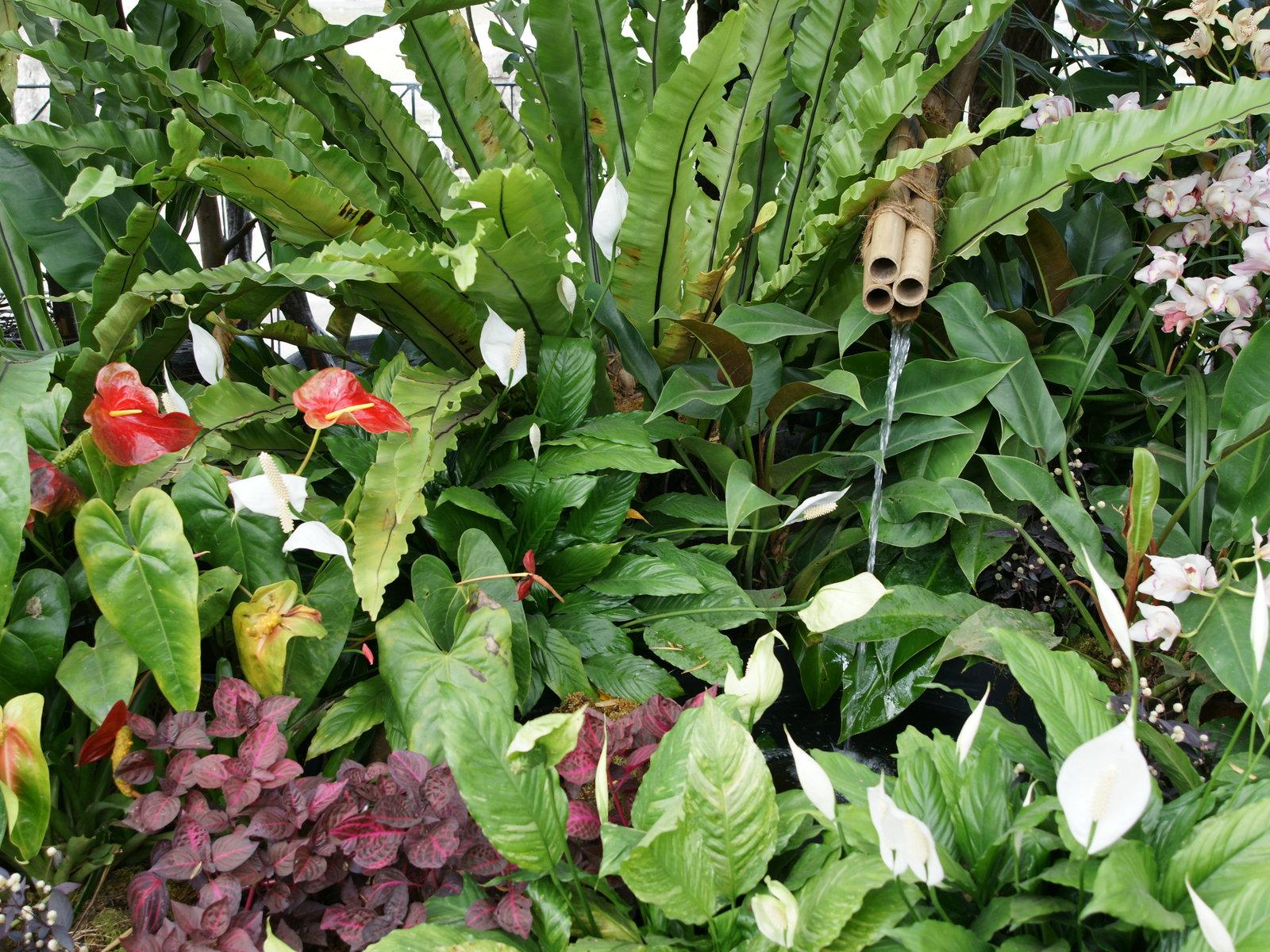 Plantas grandes e altas para jardim decorando casas - Plantas de interior tropicales ...