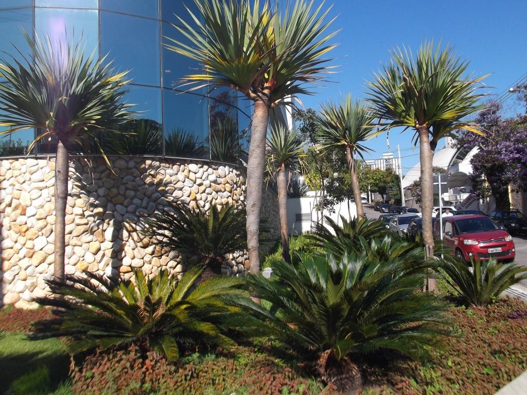plantas grandes e altas para jardim decorando casas