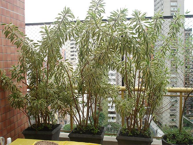 plantas para jardim altas:Planta De Casa Pequena