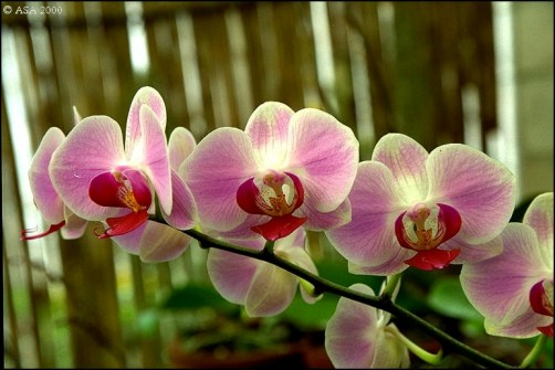 Como-escolher-as-espécies-de-orquídeas?