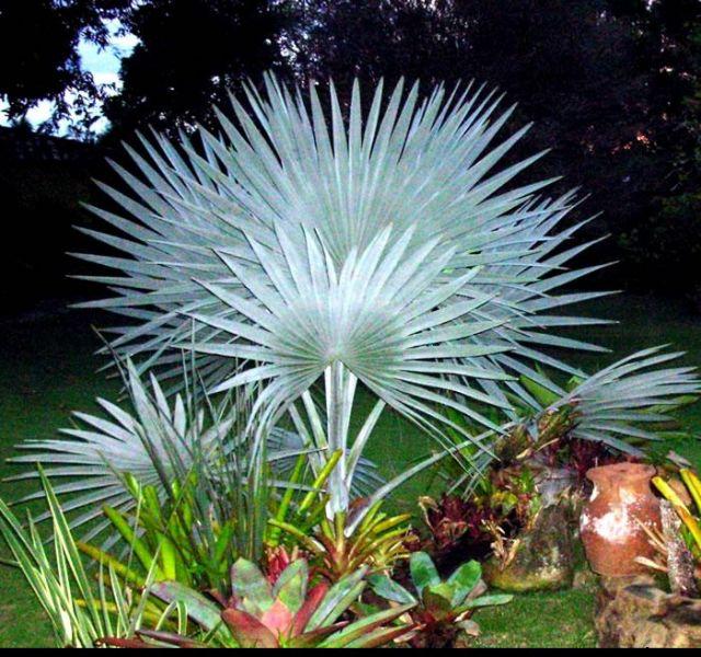 Dicas de paisagismo e jardinagem com palmeiras  Decorando Casas