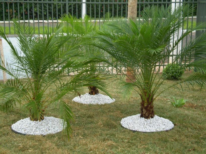 dicas de paisagismo e jardinagem com palmeiras decorando