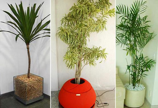 de plantas artificiais para decoração de casas  Decorando Casas