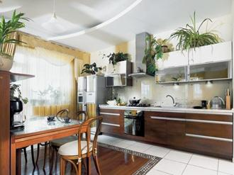 plantas-para-decorar-cozinhas