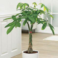 Plantas-para-apartamento-com-pouca-luz