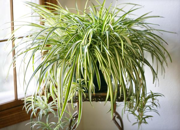 Plantas-para-apartamento-com-pouca-luz-12