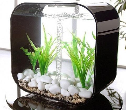 Como decorar um aquário pequeno