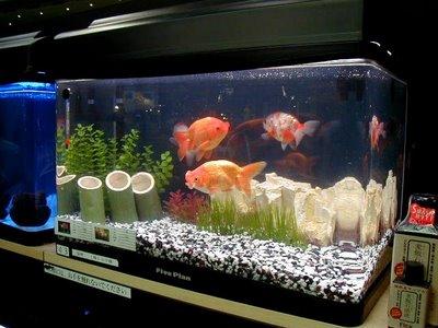 Como-decorar-um-aquário-pequeno