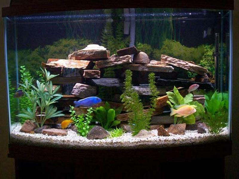 55 Gallon Aquarium Decoration Ideas Of Como Decorar Um Aqu Rio Pequeno Decorando Casas