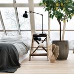 Plantas-para-ambientes-internos