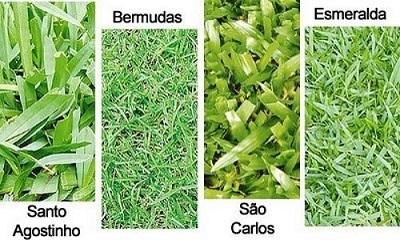 Tipos-de-grama-para-jardim-residencial