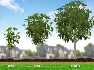 Árvores-de-crescimento-rápido-para-calçadas