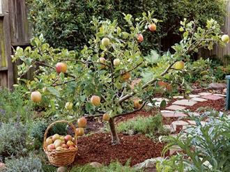 Árvores-frutíferas-de-pequeno-porte