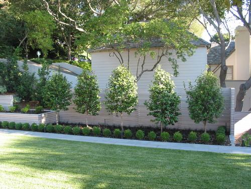 Árvores de pequeno porte para jardim