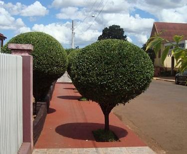 Árvores-pequenas-para-calçada