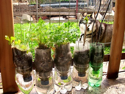 Como cultivar hortaliças