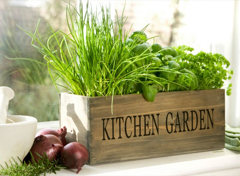 Como-cultivar-hortaliças
