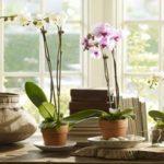 Como-cultivar-orquídeas-em-vasos