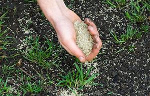 Como plantar grama para jardim