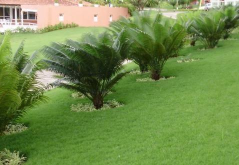coqueiros-para-jardim-pequeno