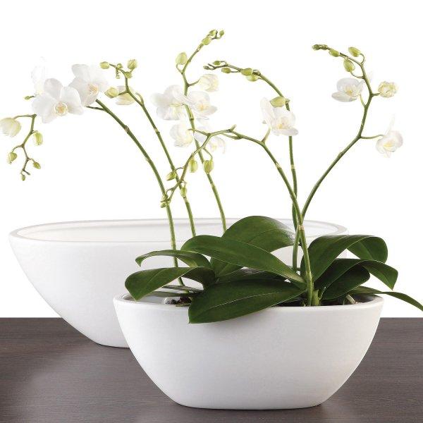Como cultivar orquídeas em vasos