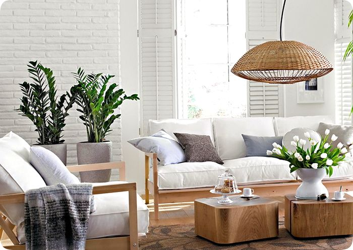 tipos de plantas para decorar interiores decorando casas