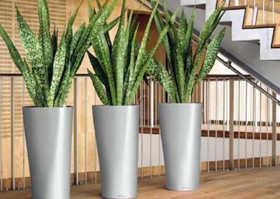 Tipos-de-plantas-para-decorar-interiores
