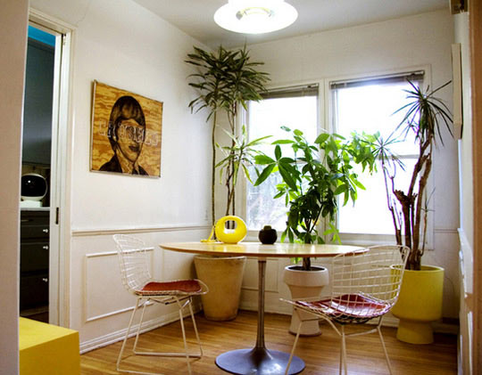 Tipos de plantas para decorar interiores