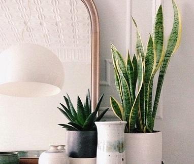 Tipos de plantas para decorar interiores decorando casas - Plantas de interior tipos ...