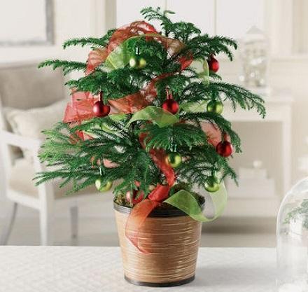 Decoração de natal com plantas e flores